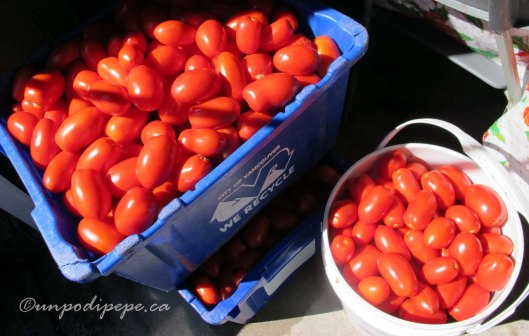 Pomodori ready to be washed