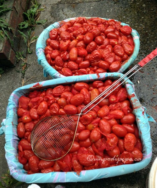 Cooked pomodori drained in baskets lined with cloth
