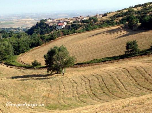 Orsara di Puglia landscape