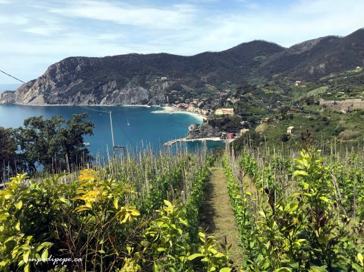Monterosso a Mare dal Sentiero Azzurro