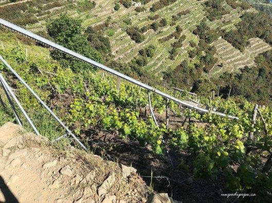 Terrazzamenti a fasce, terraced strips of farmland Volastra Cinque Terre