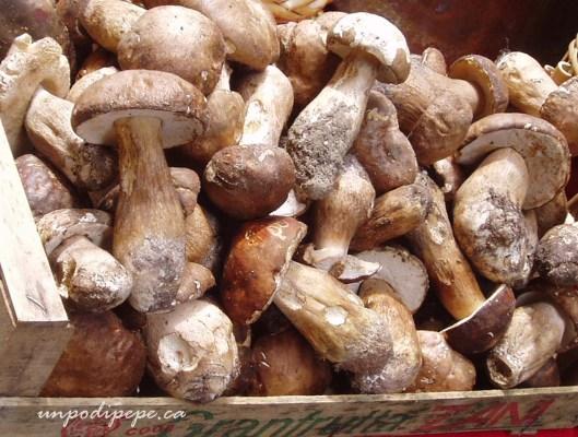 funghi porcini Roma
