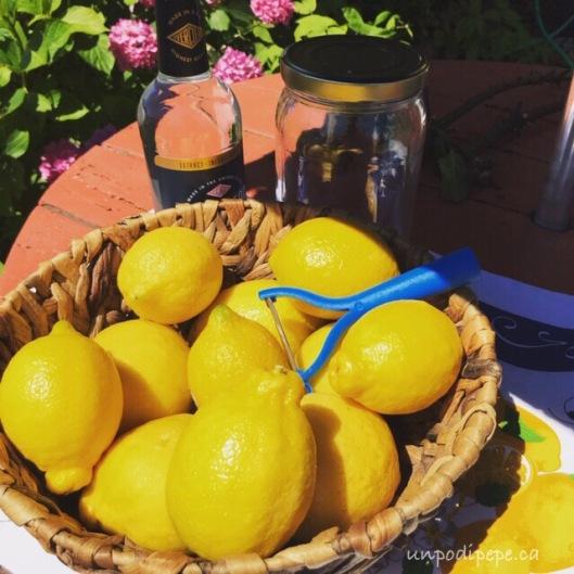 Limoni organic lemons